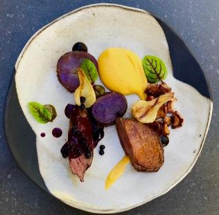 liberty duck, musque de provence creme, purple majesty, chanterelle, huckleberry